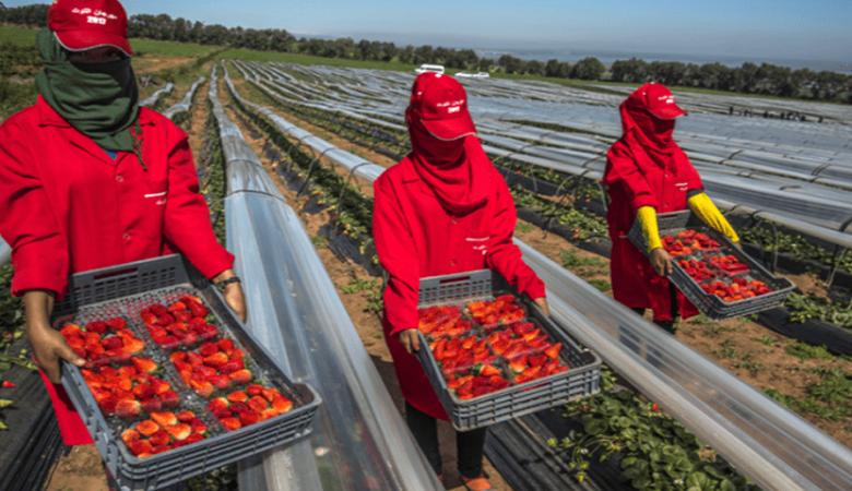الأمم المتحدة تنبه إلى وضعية المغربيات عاملات الفرولة بإسبانيا