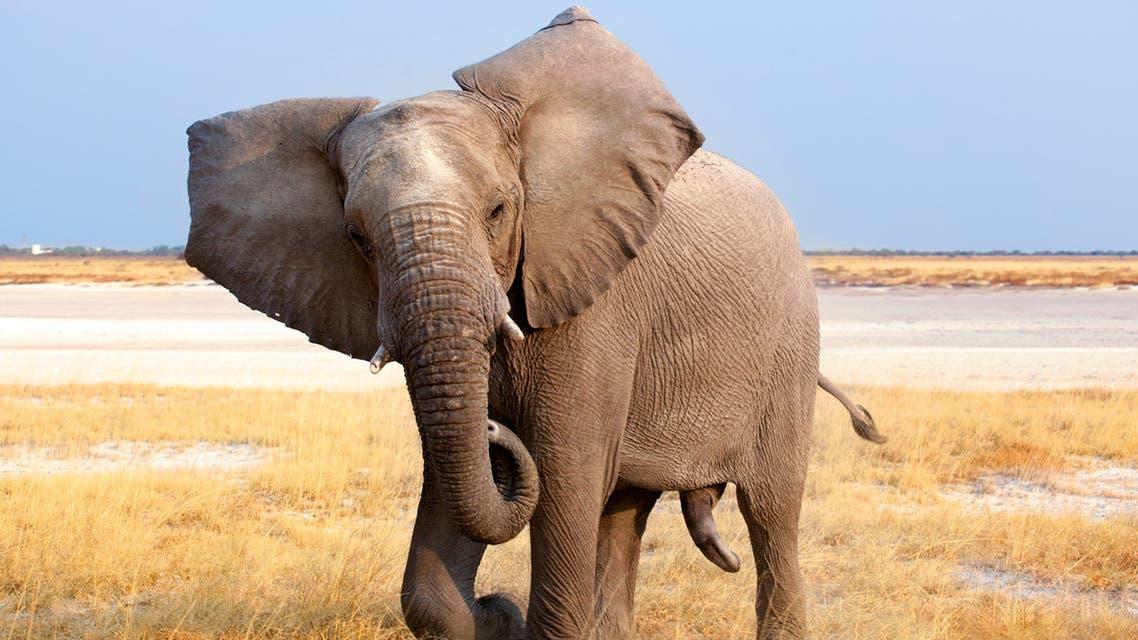 نيويورك..محكمة تنظر في أول دعوى قضائية من فيل ضد حديقة الحيوان