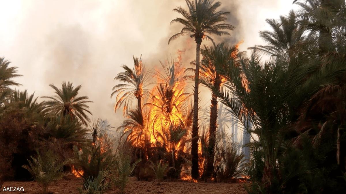 المغرب.. الحرائق تلتهم 5 آلاف نخلة بواحات زاكورة