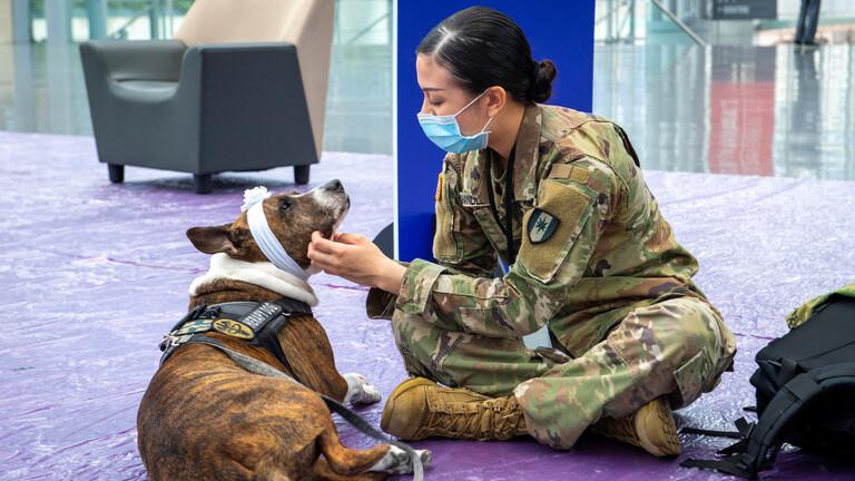البنتاغون ينفي صحة المعلومات عن ترك الكلاب في مطار كابل