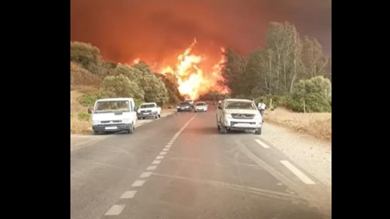 الجزائر.. اندلاع حرائق ضخمة في مدينة تيزي وزو