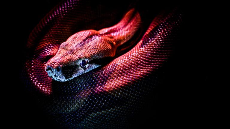 انفجار مفاجئ في التطور شهدته الثعابين بعد القضاء على الديناصورات قبل 66 مليون عام
